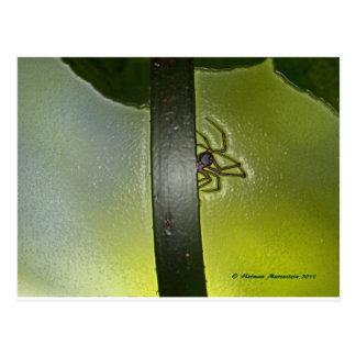 spider d postcard