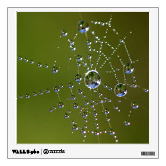 Spider Dew Wall Decal