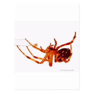 spider e postcard