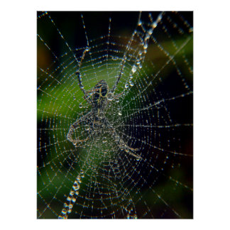 Spider Early Morning Dew Posters