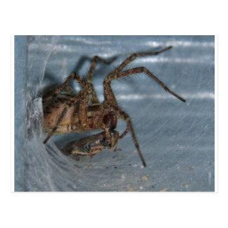Spider Eating Postcard