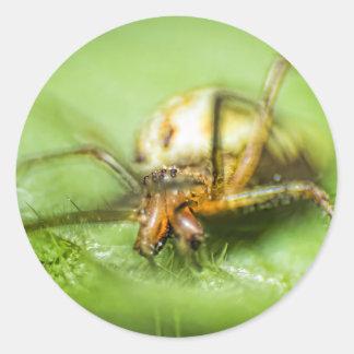 Spider Eyeeessss Classic Round Sticker