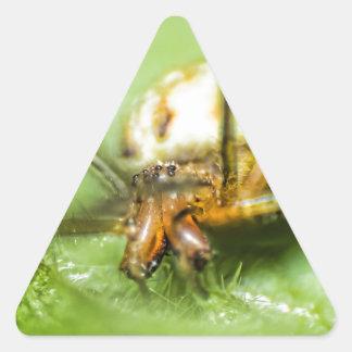Spider Eyeeessss Triangle Sticker
