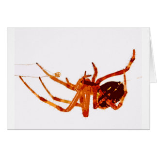 spider greeting cards