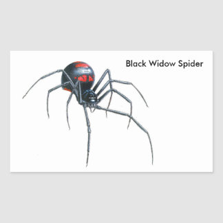 Spider image for Rectangle-Stickers-Glossy Rectangular Sticker
