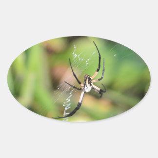Spider in 3D Oval Sticker