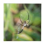 Spider in 3D Tile