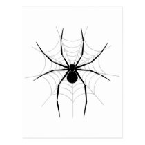Spider in a Web Postcard