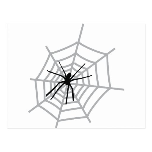 spider in cobweb postcard