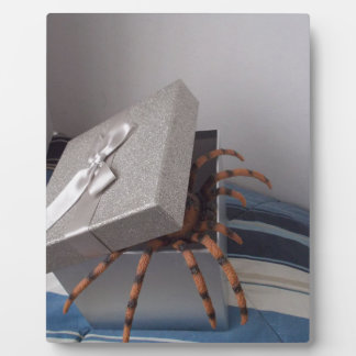 Spider in gift box plaque