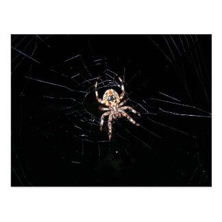 SPIDER IN THE DARK POSTCARD