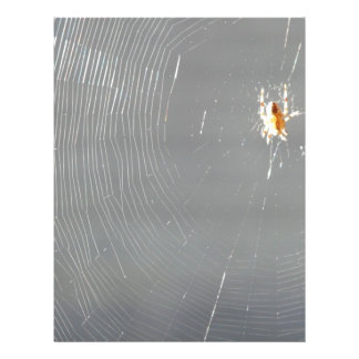 spider in the sun flyer