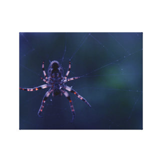 Spider in the Web Canvas Print