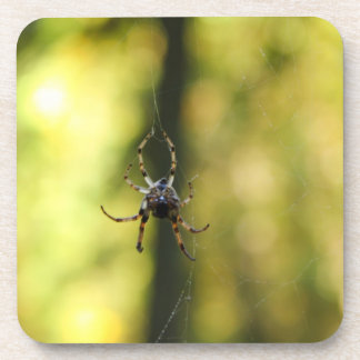 Spider in the Woods Coasters