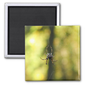 Spider in the Woods Magnet