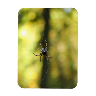 Spider in the Woods Magnets