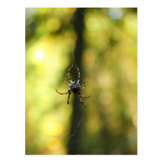 Spider in the Woods Postcards