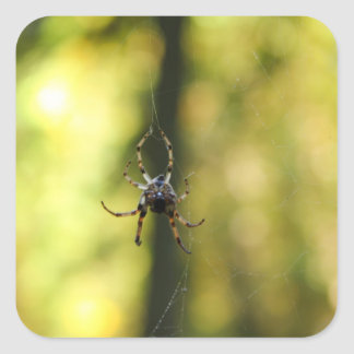 Spider in the Woods Square Stickers