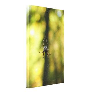Spider in the Woods Stretched Canvas Prints