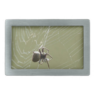 SPIDER IN WEB RURAL QUEENSLAND AUSTRALIA BELT BUCKLE