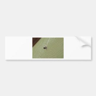 SPIDER IN WEB RURAL QUEENSLAND AUSTRALIA BUMPER STICKER