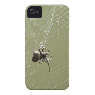 SPIDER IN WEB RURAL QUEENSLAND AUSTRALIA Case-Mate iPhone 4 CASES