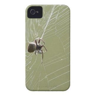 SPIDER IN WEB RURAL QUEENSLAND AUSTRALIA iPhone 4 Case-Mate CASES