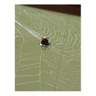 SPIDER IN WEB RURAL QUEENSLAND AUSTRALIA POSTCARD