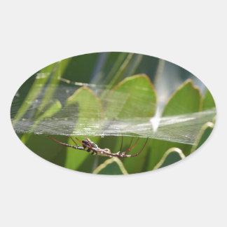 SPIDER IN WEB WEAVING RURAL QUEENSLAND AUSTRALIA OVAL STICKER
