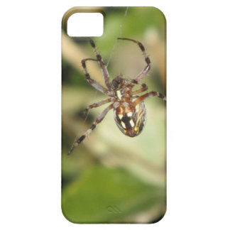 Spider iPhone 5 Case