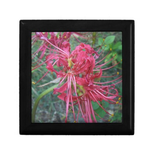 Spider Lily Bloom Gift Box