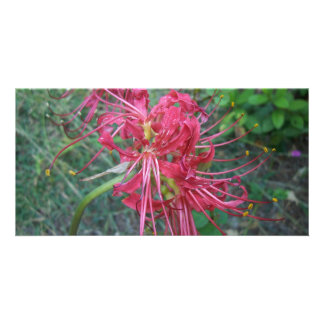 Spider Lily Bloom Customized Photo Card