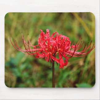 Spider Lily Mouse Pad