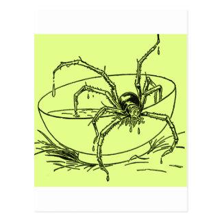 Spider Milk Postcard