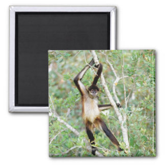 Spider monkey at the Belize Zoo 2 Inch Square Magnet