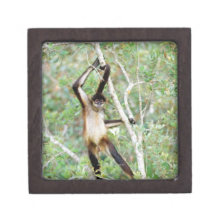 Spider monkey at the Belize Zoo Jewelry Box
