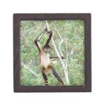 Spider monkey at the Belize Zoo Premium Jewelry Box