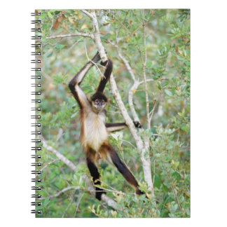 Spider monkey at the Belize Zoo Spiral Notebook