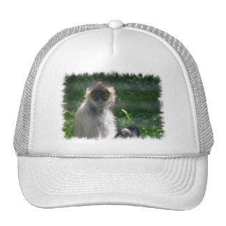 Spider Monkey  Baseball Hat