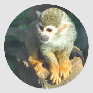 Spider Monkey Classic Round Sticker