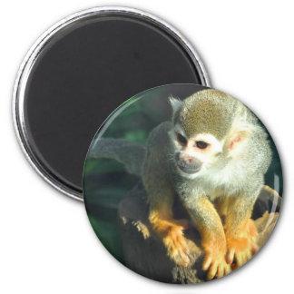 Spider Monkey Magnet