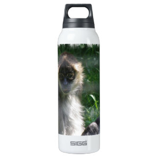 Spider Monkey  SIGG Thermo 0.5L Insulated Bottle