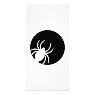 Spider moon night photo card