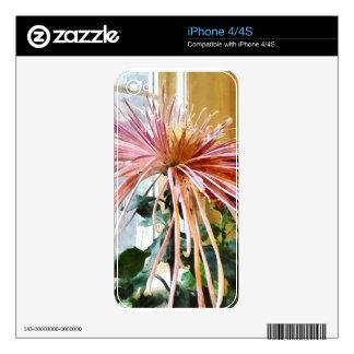 Spider Mum Pink Splendor Skin For iPhone 4S