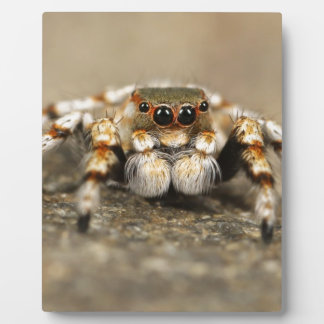 Spider Nature Animals  Wild  insects Photo Plaque
