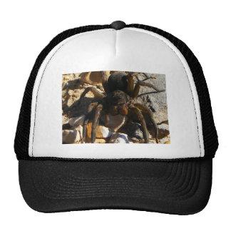 SPIDER NEAR THE TRACKS TRUCKER HAT