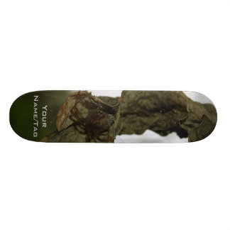 Spider Nest Skateboard