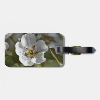 Spider On Pear Blossom Bag Tags