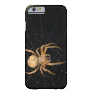 Spider on the spiderweb barely there iPhone 6 case