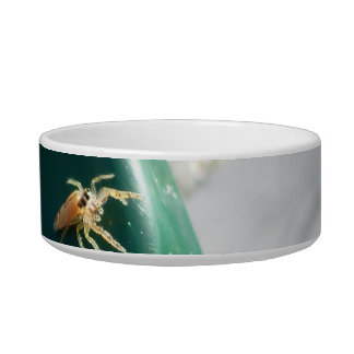Spider on water foutain bowl
